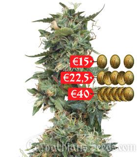 Лучшие семена конопли купить как жарить конопли