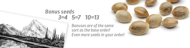 Bonus+eng-1170×300