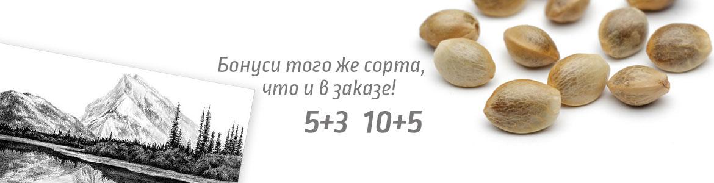 Bonus-5+3-1170×300