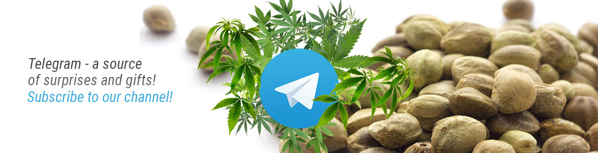 Telegram-eng-1170×300