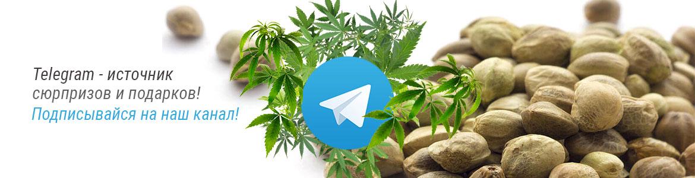 Telegram-rus-1170×300